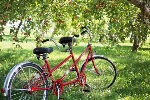 Vélo en tandem à Villers sur Mer