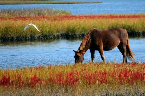 Le marais de Villers sur Mer et son île aux oiseaux