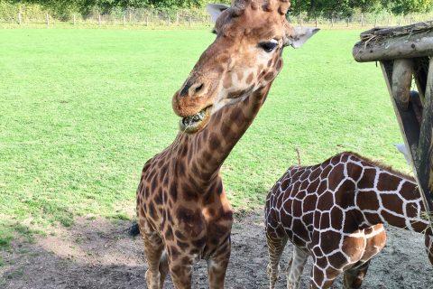 Cerza : parc animalier en Normandie
