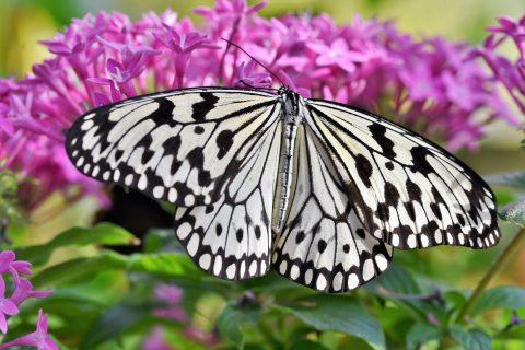 Papillon tropical du Naturospace